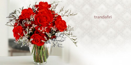 600X300_trandafiri